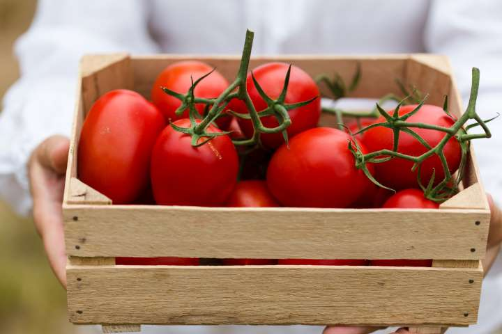 tomatoes in keto diet